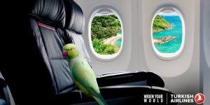 Turkish Airlines promotivne cene avio karata za Istanbul, Tursku, daleke i egzotične destinacije