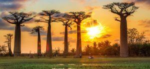 Madagaskar - promocija putovanja: 10 dana/9 noći već od 1149 eur! Posetite ovu magičnu zemlju koju nazivaju i osmim kontinentom po najpovoljnijim cenama.q