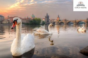 Prag / Češka- najpovoljnije putovanje po vašoj meri. Izaberite avio karte i hotelski smeštaj po promo cenama. Uvek imamo najbolju ponudu za Vas.