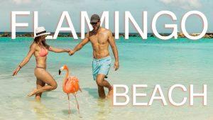Aruba - najpovoljnije egzotično putovanje po vašoj meri. Izaberite avio karte i hotelski smeštaj po promo cenama. Uvek imamo najbolju ponudu sa najnižim cenama!